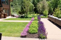 landscaping, softscapes